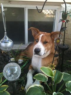 Dog in garden