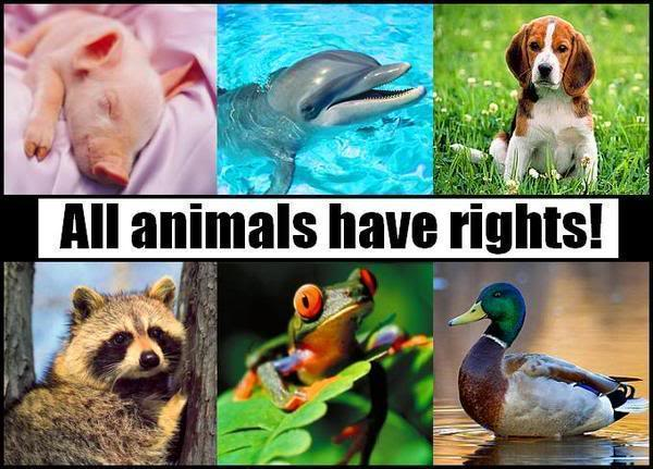 Image result for I'm an animal lover